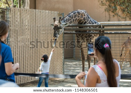 Los Angeles, California, USA -August 01, 2018: Unidentified visitors feeding giraffe at the Los Angeles Zoo and Botanical Gardens which is a 133-acre zoo founded in 1966  in Los Angeles, California. #1148306501
