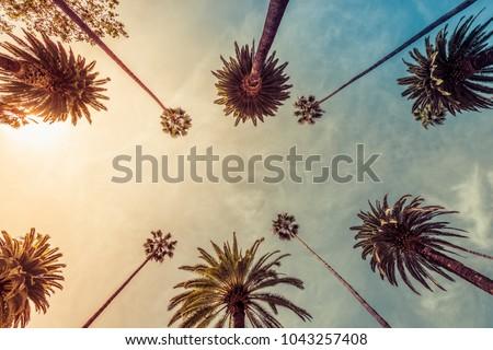 Los Angeles palm trees, low angle shot. Sun rays #1043257408
