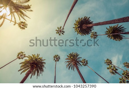 Los Angeles palm trees, low angle shot. Vintage tone - Shutterstock ID 1043257390