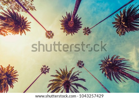 Photo of  Los Angeles palm trees on sunny sky background, low angle shot. Vintage tone