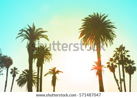 Los Angeles with Palm Trees Vintage in clear summer sky