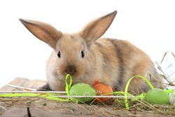 lose-up of easter bunny on white background studio