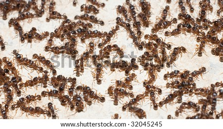 Lot of ants on a wall macro image