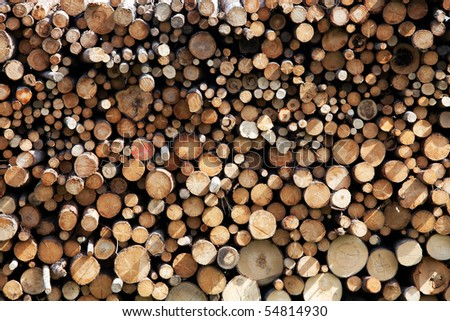 Lot of cutted trees