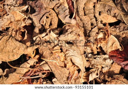 Lot of  dry leaves lying on the ground