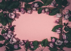 Lot of fresh blooming apple tree twigs or cherry on wooden frame on pink backdrop. Trendy dark Mystic Spring floral concept. Dark toned image. Top view, flat lay. Copy space for text.