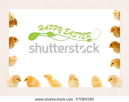 Lots of baby chicken in different positions on a frame - copyspace