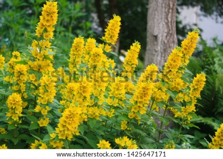 Lots of bright yellow flowers and greenery, tree and greenery in the background #1425647171