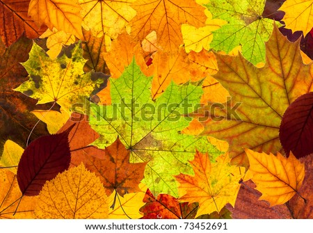 lots of colorful autumn leaves as a background texture