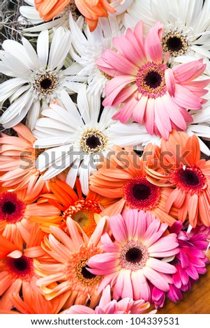 Lots of Colorful White, Red, Yellow and Pink Gerbera Flowers Background