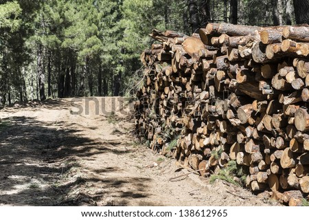Lots of cut trees for the timber industry