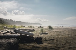 Lots of driftwood on long beach in Tofino with fog in background