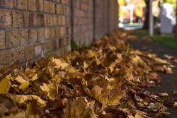 Lots of fallen autumn brown leaves on the sidewalk beside the brick wall. Focus on foreground. Beautiful fallen maple leaves. Copy space. Ballinteer, Dublin, Ireland