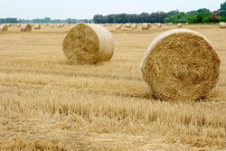 Lots of haystacks on an agricultural field