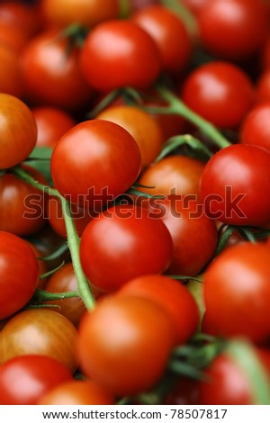 lots of juicy red tomatoes