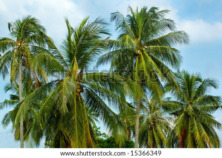 lots of palm trees on sky background - stock photo