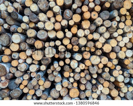 Lots of Piled Wood Logs of Natural Birch and Other Trees #1380596846