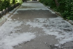 Lots of poplar fluff over the path in the city Barnaul, may 2020