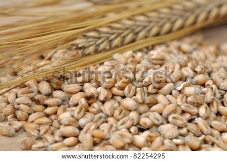 lots of seeds and grains  and an ear