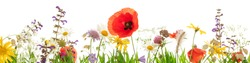 Lots of wild herbs and flowers in front of white background, Header
