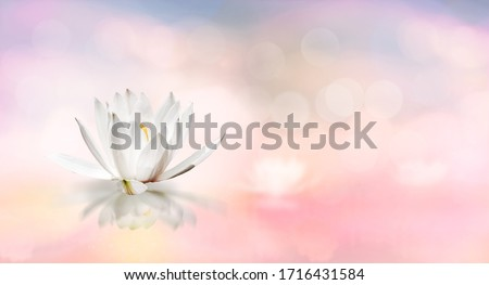 Lotus floating on water and soft blur bokeh reflection on panorama pastel dream color background, White lily water flower on water, White lotus flower refers to purity of mind and spirit in Buddhism