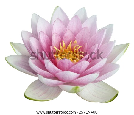 stock photo Lotus flower