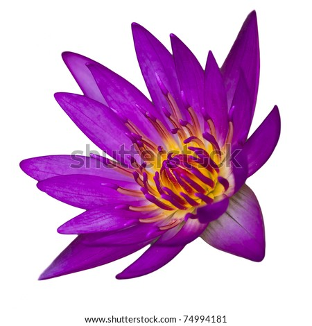lotus flower - stock photo