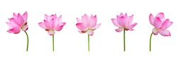Lotus flower collections isolated on white background. File contains with clipping path so easy to work.