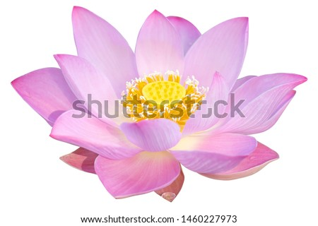 Lotus flower isolated on white background Foto stock ©