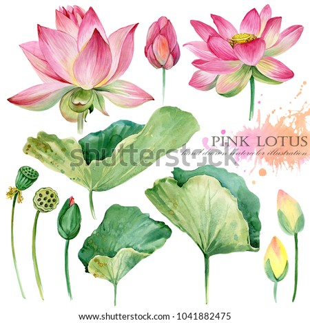 lotus flowers and leaves hand drawn watercolor set
