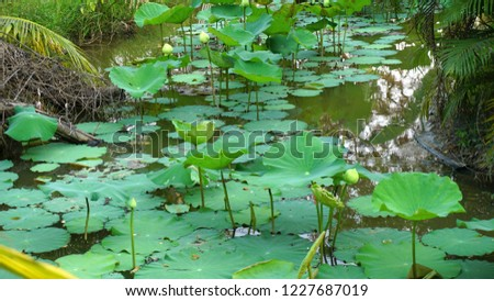 Lotus in a pond #1227687019