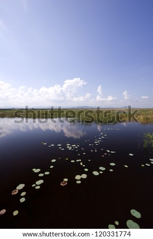 Lotus lake at Khao Sam Roi Yod National Park Thailand
