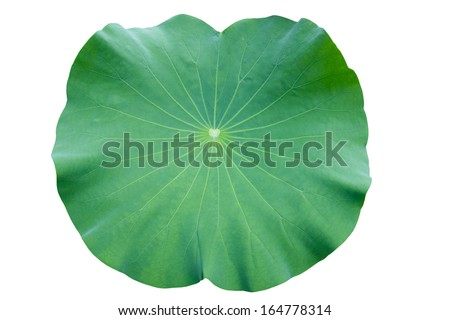 Lotus leaf. isolate on white background. #164778314