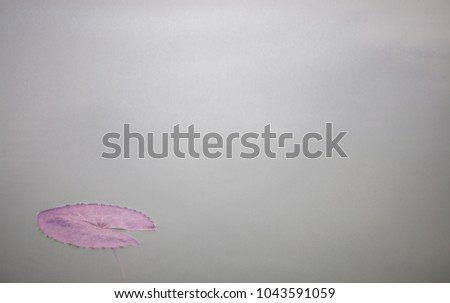 Free photos black and white abstract of lotus flower abstract of lotus leaf isolated on water background 1043591059 mightylinksfo