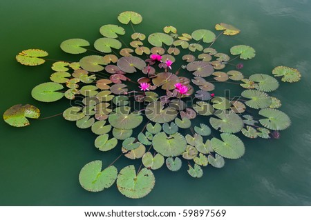 Lotus pattern in green pond, - stock photo