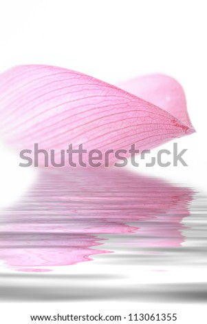 Lotus petal collection on white background