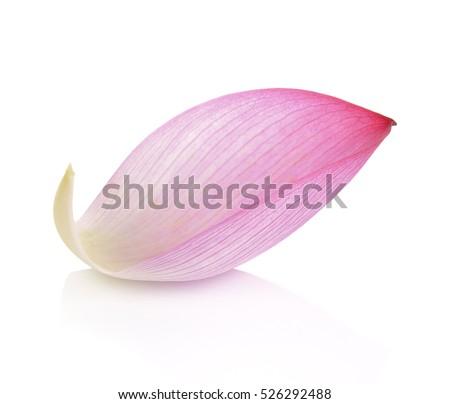 Lotus petal on white background #526292488