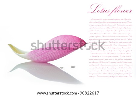 Lotus petal on white background with area for your text