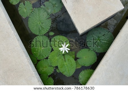 Lotus Pond Reflection #786178630