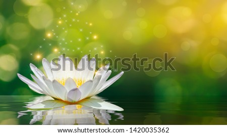 lotus white light purple floating light sparkle background