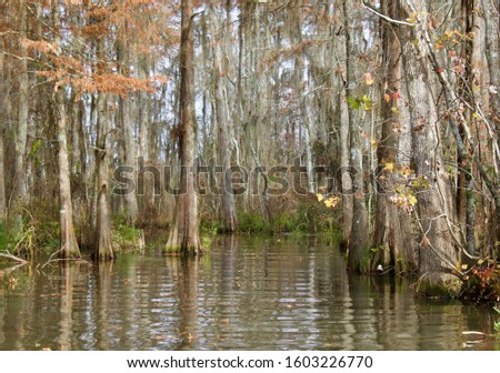 Louisiana Bayou - New Orleans, Louisiana