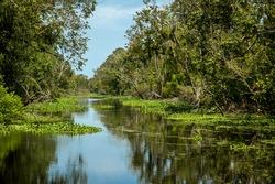 Louisiana bayou on a hot summer afternoon.