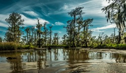 Louisiana swamp lands near New Orleans