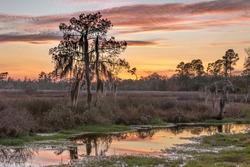 Louisiana swamp sunset with tree