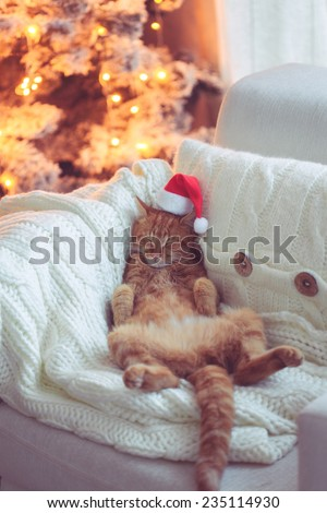 Lovable ginger cat wearing Santa Claus hat sleeping on chair near Christmas tree at home