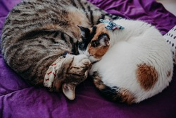 Love and affection between cat brothers.