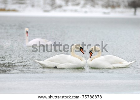 love and fidelity of the swans, two is company, but three is none