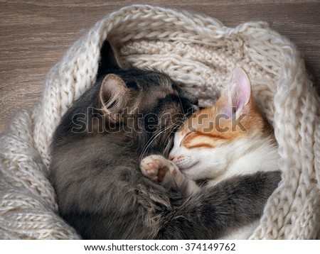 Love and tenderness. Big gray cat and a small cat sleeping together, hugging each other. Cat paw affectionately hugging cat. Cute cats, family