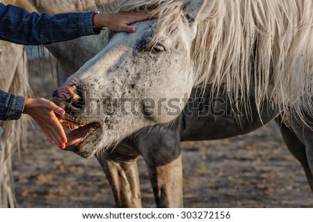 Love between a woman and a horse