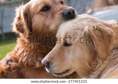 Love between dogs #277401233